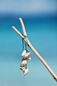 Seashells tied to stick, close-up