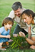 Little boy gardening with father and grandfather