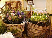 Baskets of spring flowers on sale in florist shop