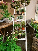 Various flowers & plants on ladder, table & chair outside