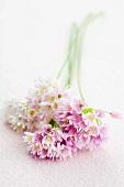 Flowering society garlic