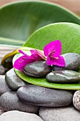 Bougainvillea flowers and wet pebbles on a large leaf