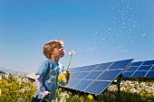 Little boy with dandelion clock in front of solar panels