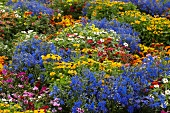 Bed of summer flowers