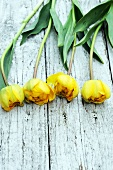 Vier gelbe Tulpen auf Holzuntergrund
