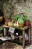 Rustikaler, verwitterter Holztisch mit Topfpflanzen in Tontöpfen und Gartenutensilien an Ziegelsteinwand; davor ein rostiger Klappstuhl