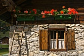Troughs of flowering geraniums on balcony balustrade of sunlit alpine farmhouse with stone and wood facade
