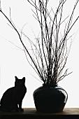Eine schwarze Katze neben einer schwarzen Vase mit Zweigen
