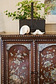 Exotische Muscheln und Topfpflanze auf antikem Schrank mit floralen Perlmutt-Intarsien
