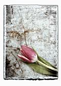 Collage mit Tulpe