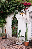 Steinterrasse mit üppig bewachsener Gartenmauer und Kakteen in Terrakottavasen