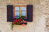 Colorful Flowers in Window Flower Box