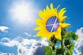 Sunflower with solar panel against blue sky and sun