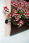 Balcony flowers in terracotta window box on window sill