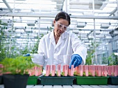 Scientist examining potted plants