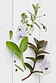 Herbs and violet flowers on a white surface