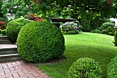 Trimmed box hedges in a garden