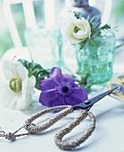 Secateurs and anemone flower on a table