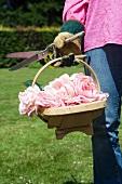 Frau hält Korb mit abgeschnittenen Rosenblüten