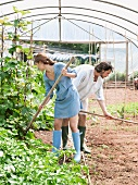 Man and woman gardening in greenhouse