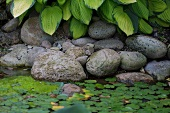 Stones and pond plants in a biotope