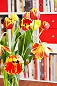 Bouquet of tulips in front of a book shelf