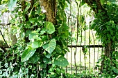 Plants growing over a wooden gate