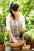 Woman planting herbs in pot