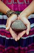 Hands Holding a Large Cockle Shell