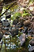 Woodland stream with mossy stones