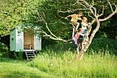 Drei Kinder klettern auf Baum im Garten
