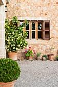 Topfpflanzen im Aussenbereich einer traditionellen Finca mit Natursteinfassade