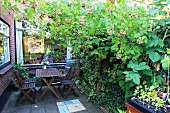 Wooden table and chairs on terrace surrounded by raspberries and ivy in residential complex with exposed brickwork; minimalist summer allotment atmosphere