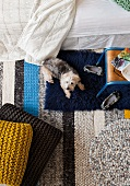 View from above of a small dog between floor pillows and a bed on a striped carpet