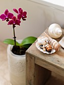 Collection of seashells on rustic wooden stool next to flowering orchid