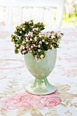 Outside -- oregano flowers in an egg cup on a rose patterned tablecloth