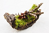 Moss with peony seeds on the stem and dried fern leaves on tree bark