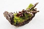 Moos mit Samenstand der Pfingstrose und trockenen Farnblättern auf einer Baumrinde