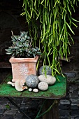 Assorted stones and jade plant on an old metal table