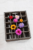 Assorted flowers (dahlia, zinnias, asters, sunflowers) stuck in an old beer crate