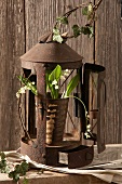 Lily of the valley and ivy tendrils in front of a rusty lantern