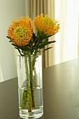 Orange Chrysantheme in transparenter Glasvase auf einem Holztisch