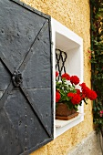Red geraniums in terra cotta pots in front of barred windows