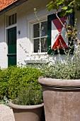 Pflanzentöpfe vor traditionellem Haus mit bemaltem Fensterladen