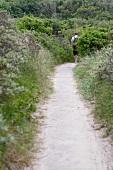 Mann läuft schmalen Weg entlang durch grüne Dünenlandschaft