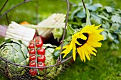 Vegetable basket with sun flowers