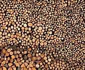 Wood pile (fills the screen)
