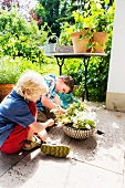Two young boys with plant pots on a terrace