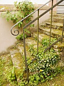 Old stone stairs with metal railings in the garden