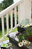 Potting up plants on steps; gardening utensils and white flowering potted plants